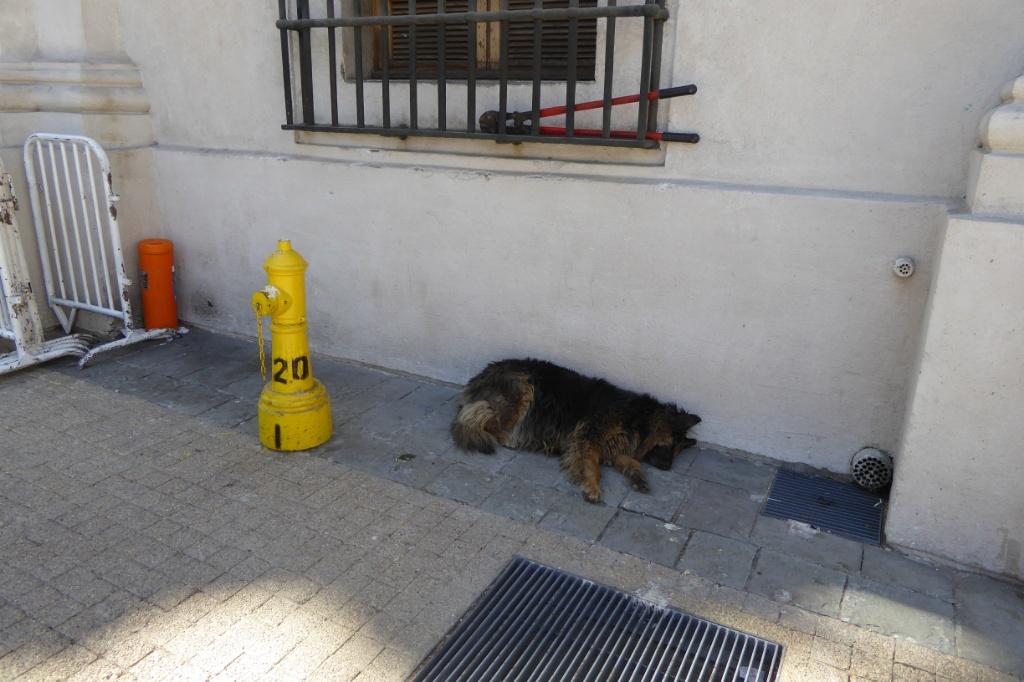 ¡Me olvidé de los perros! No solo es una ciudad de personas... Los hay a centenares por todas partes.