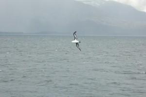 A nuestro paso numerosas aves emprenden el vuelo