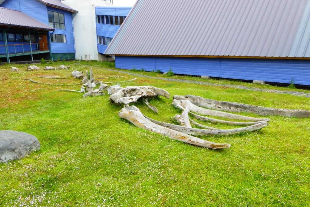 No llegamos a visitar el Museo Gusinde, pero en el exterior vimos este esqueleto de ballena-