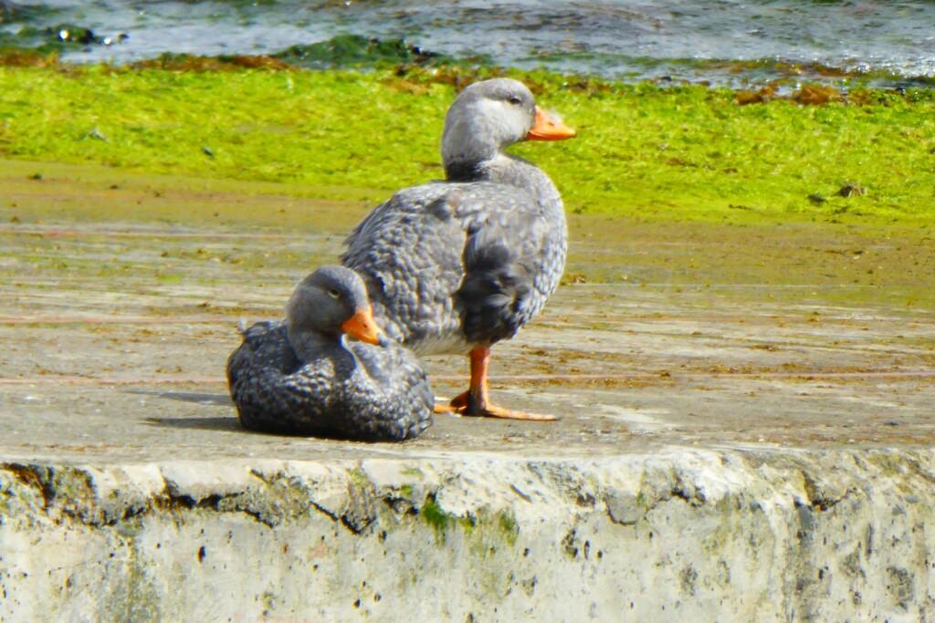El Puerto Lusia estaba cerrado pero en el muelle dos patos se secaban al sol