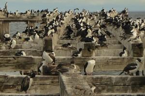 cormoranes.jpg