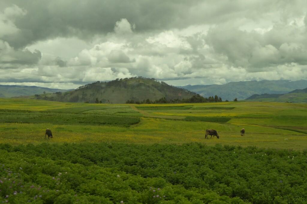 La mayor parte del trayecto desde Cusco trascurre por un altiplano verde y rico.  Cubierto de campos, con vacas, cerdos, ovejas y caballos.