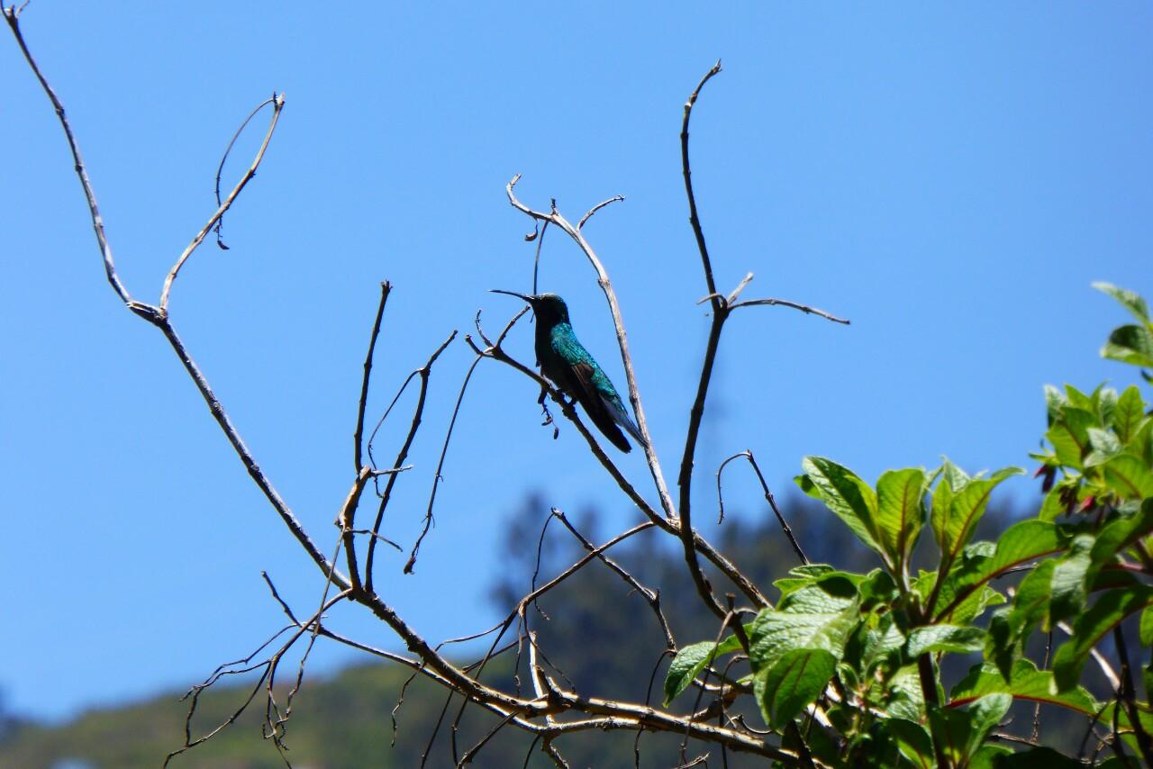 Y un colibrí nos visita a menudo en el jardín, inluso se posó un segundo en una ramita entre vuelo frenético y vuelo frenético para que pudiera hacerle una foto