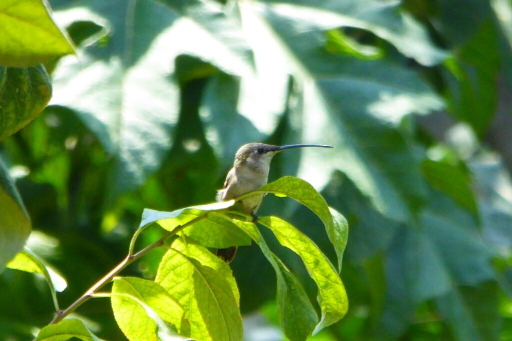 Y un colibrí