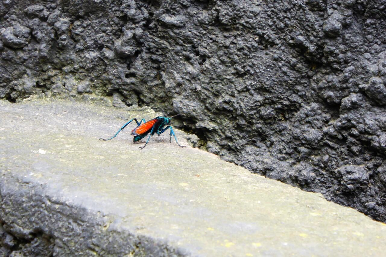 Al final el más afortunado es este colorido insecto que se paseaba junto a la jaula del jaguar