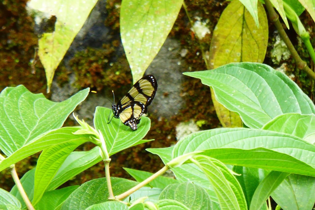 No las veremos convertirse en mariposas, pero quizá sean como ésta...