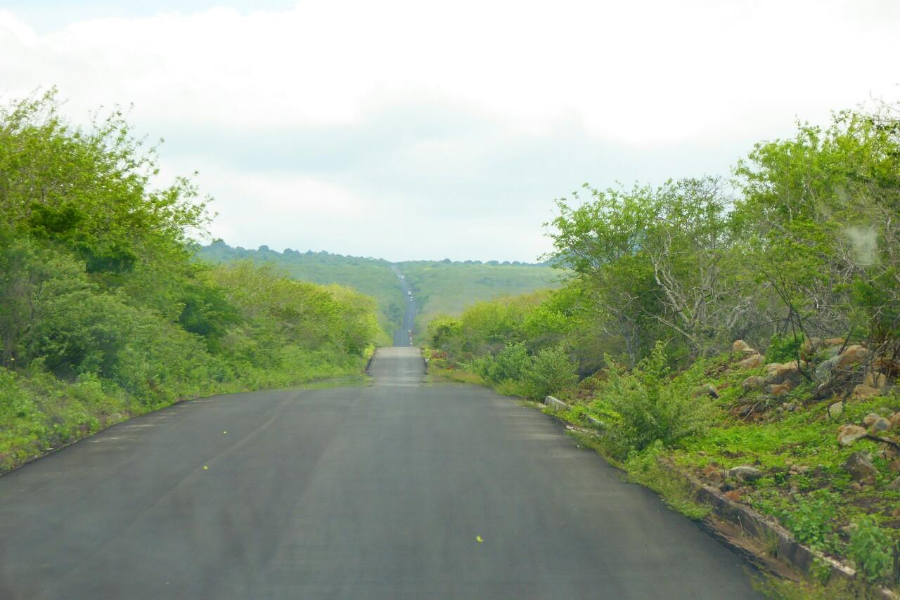 Directos a Puerto Ayora