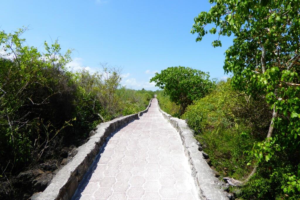 El camino a Tortuga Bay