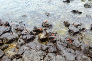 Cangrejos de lava