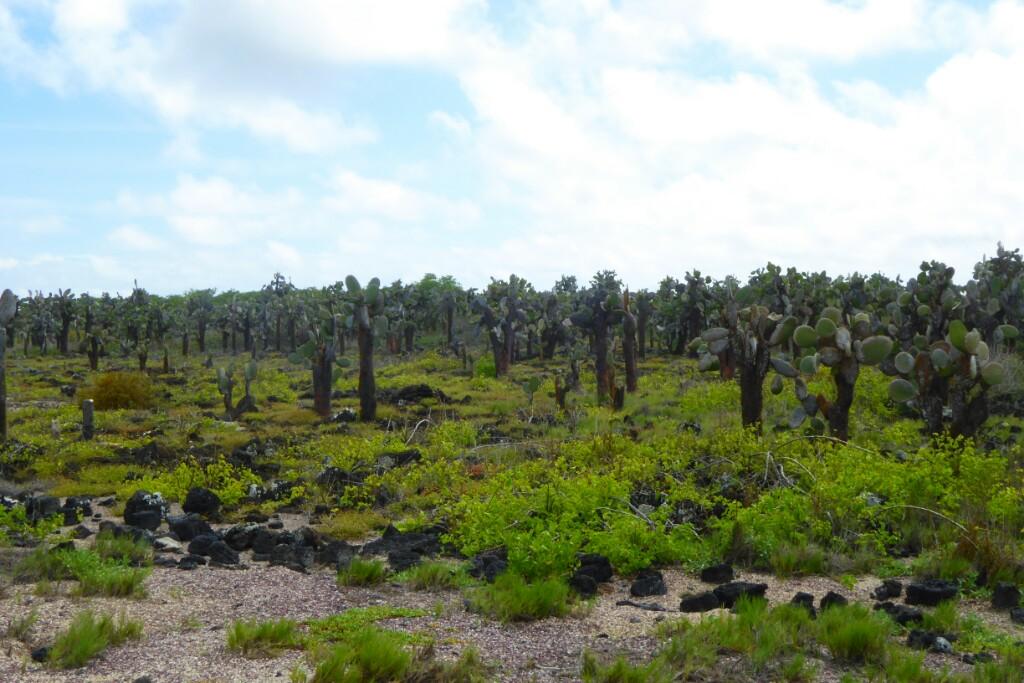 Bosque de opuntias