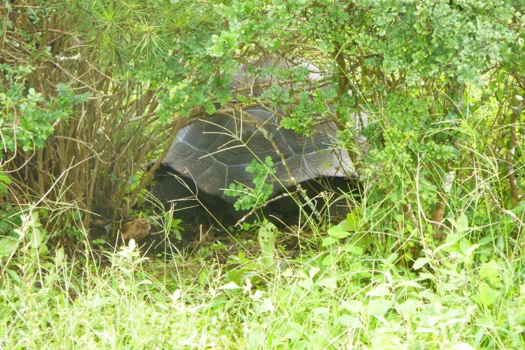 Escondida entre los arbustos nos esperaba una grata sorpresa