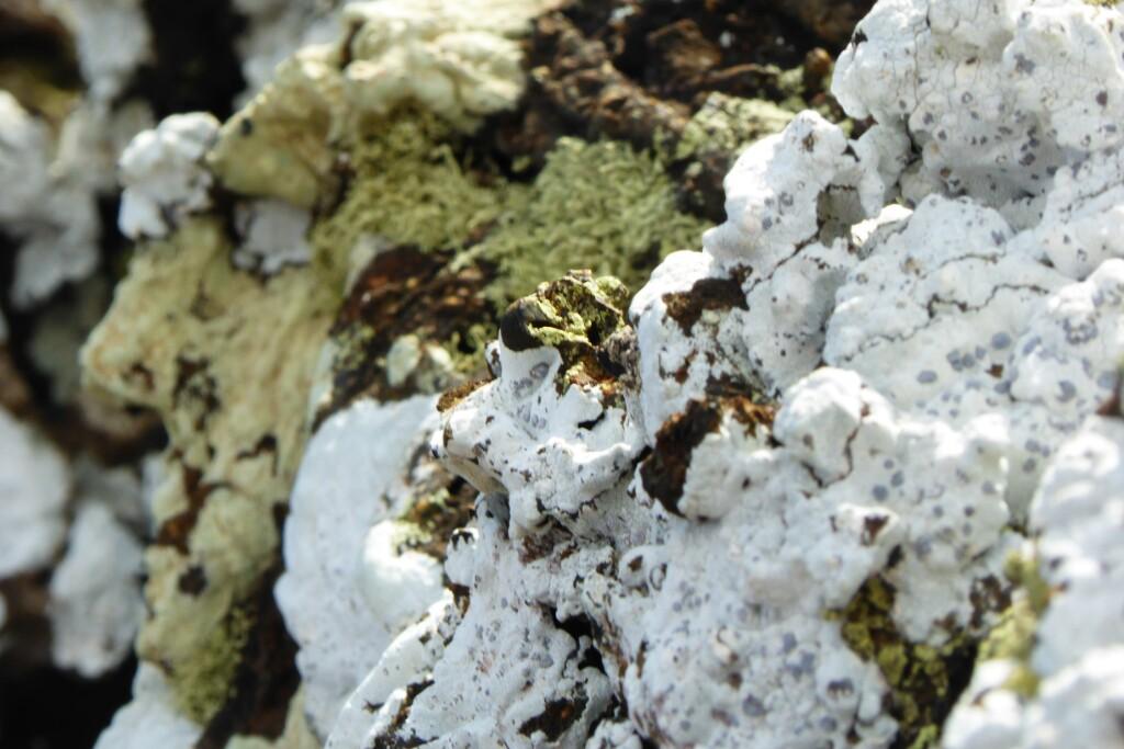 Líquenes colonizando las rocas