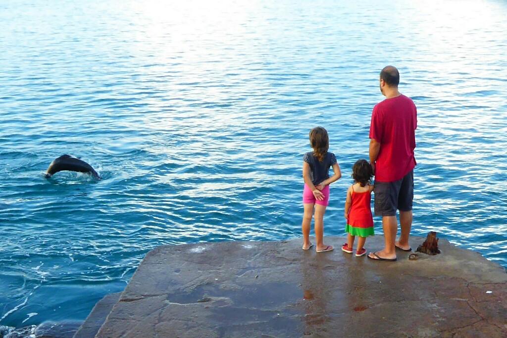 Mirando jugar a los lobos mientras esperamos el barco que nos devolvía a Santa Cruz